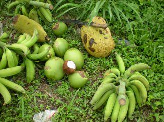 Jackfruit, jellies and green plantain
