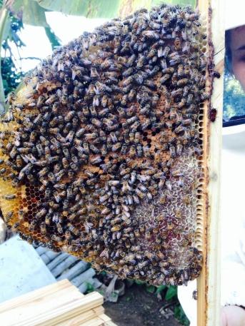 Bees, bees, bees...