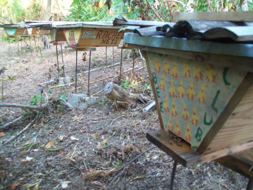 Top bar hives decorated bu Bee Club members in the training apiary