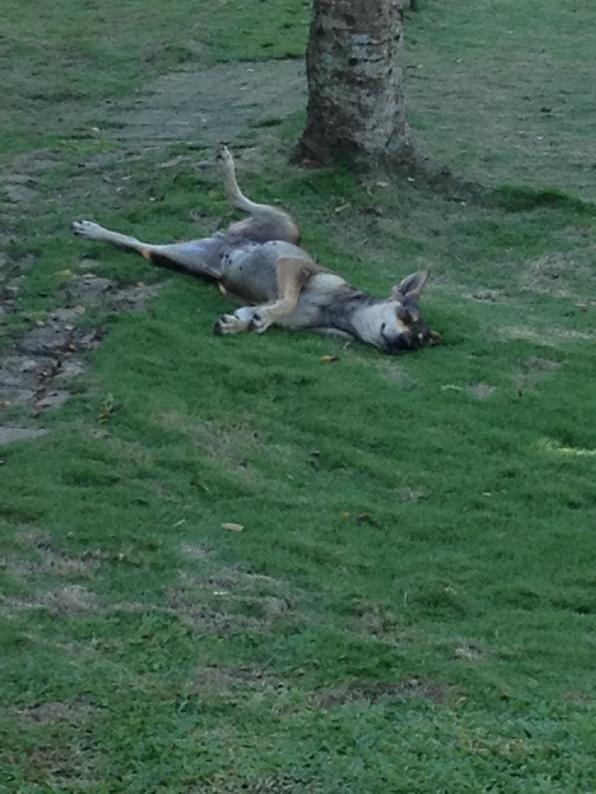 Sprawling dog