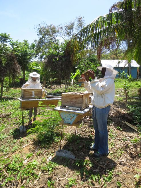 Caring for the bees, working with them...