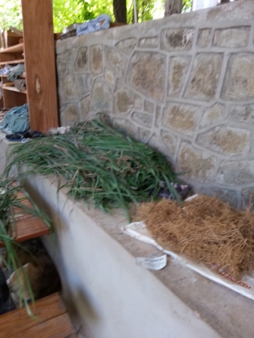 Fevergrass and khus khus grass root (vetiver) ready for distillation.