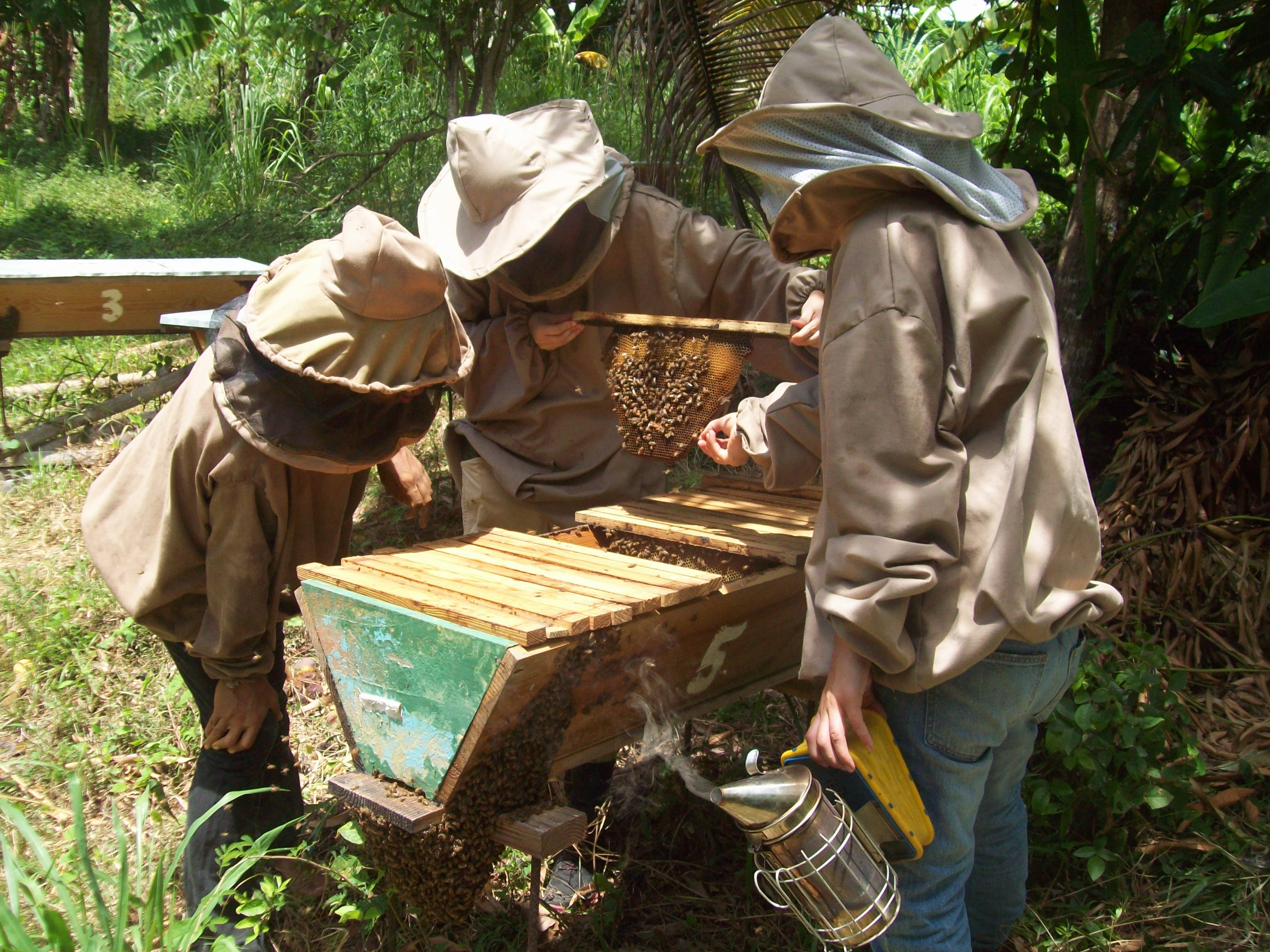 Top Bar Beekeeping Internship