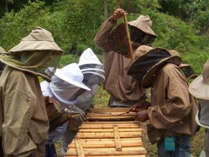 Teaching Portland parish beekeepers