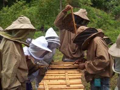 Teaching Portland parish beekeepers