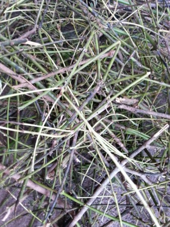 Cinammon twigs