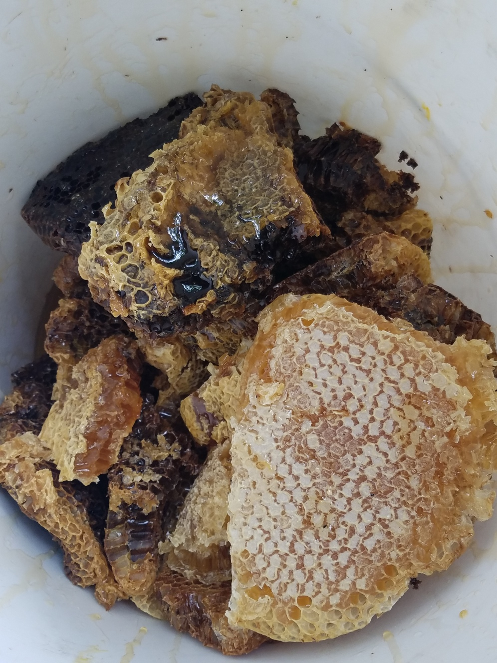 Freshly-harvested honey comb from our top bar hives
