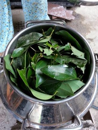 Cinnamon leaf in distiller