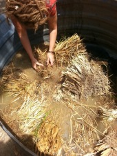 Vetiver washing