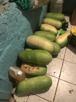 Enough watermelon for the week